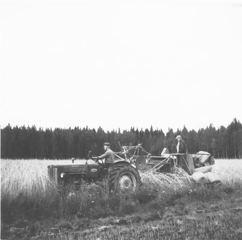 Viljanpuintia Häkkisessä 1960-luvulla_1 001.jpg