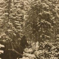 Metsätöistä