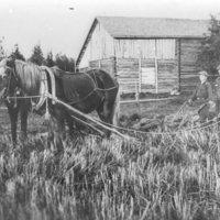 Isä ja pojat hevosauran perässä
