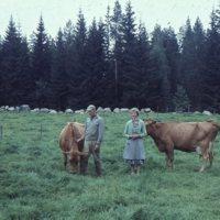 Edvin Mäkinen ja vaimo Huhkojärveltä lehmineen.jpg